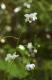 希少植物場咲く雲上の楽園 『岳人の森』と神通の滝