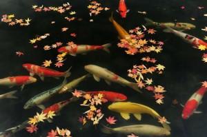 三景園池鯉