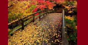 三景園紅葉もみじはし