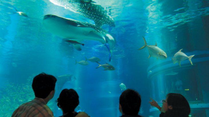 徳島新聞夏休み子供教室(A) 「海遊館」の裏側とストラップ作り体験(大阪)日帰り
