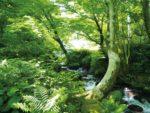 森林浴でリフレッシュ 鳥取・奥大山木谷沢渓流と大山ブナの森をガイドとともに散策 徳島発日帰り