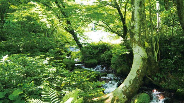 【徳島発】森林浴でリフレッシュ 奥大山木谷沢渓流と大山ブナの森をガイドとともに散策(鳥取)