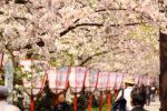 【徳島発】FDAチャーター便で行く!函館と春めく奥入瀬渓流・十和田湖と桜舞い上がる弘前公園(北海道・青森)3日間