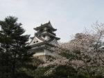 春のおさそい 高知城お花見と桂浜公園自由散策