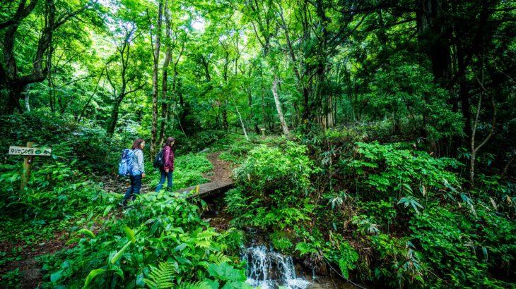森林セラピーツアーゆりかごの小径(岡山日帰り)