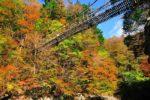 紅葉の奥祖谷二重かずら橋といやしの温泉郷