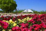 【徳島発】RSKバラ園と旧閑谷学校の紅葉・牛窓オリーブ園