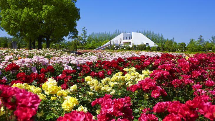 【徳島発】RSKバラ園と旧閑谷学校の紅葉・牛窓オリーブ園(岡山 日帰り)