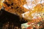 【徳島発】自然に溶け込む愛媛随一の紅葉名所 瑞応寺と西山興隆寺  体験!水引作り(愛媛・日帰り)