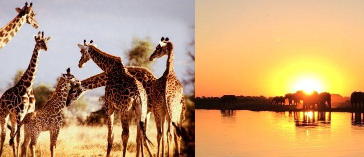 徳島空港から行く感動の南部アフリカ4か国周遊8日間(南アフリカ・ジンバブエ・ボツワナ・ザンビア)