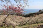 2万本!海の見える綾部山梅林と赤穂城跡を歩く