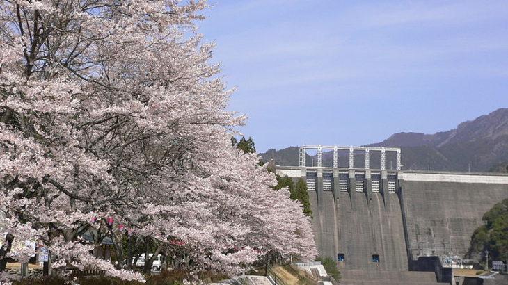 早明浦ダム湖畔の桜と内部見学 土佐あかうしステーキ膳の昼食