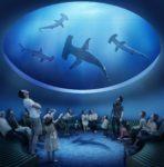 水と命の物語をめぐる四国水族館と一度は訪れたい絶景フォトスポット父母ヶ浜