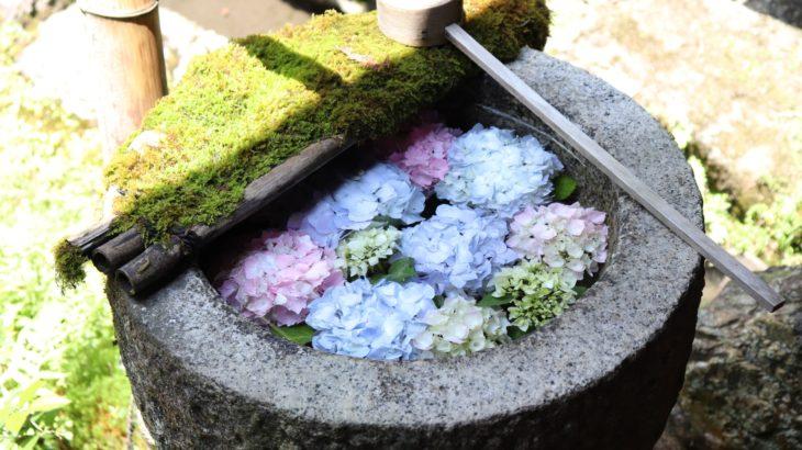 京都花めぐりの旅【6月】~紫陽花のプロムナードに出会う旅~