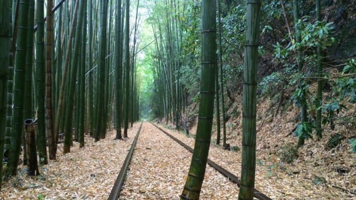 竹林と廃線のフォトジェニック 旧国鉄倉吉線廃線跡トレッキング