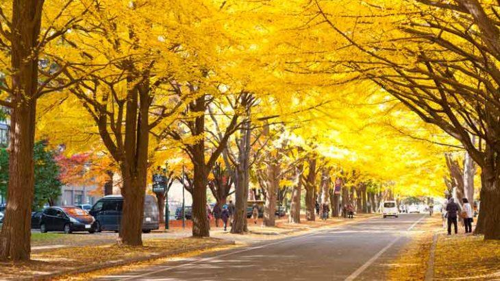 GOTOトラベル事業支援対象 黄葉のメイプル街道と有珠山ロープウェイ・北海道大学イチョウ並木