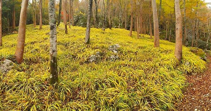徳島のええとこあるでよ!! 希少植物が咲く雲上の楽園 現地ガイドと歩く四国山岳植物園「岳人の森」と神通の滝
