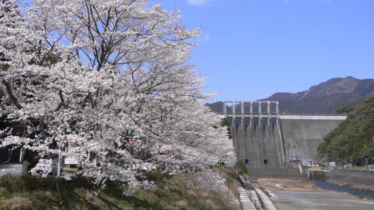 2000本のソメイヨシノが彩る早明浦ダム湖畔の桜と幻の和牛「土佐あかうしステーキ膳」昼食(高知)