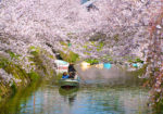 ええとこあるでよ 弘法大師ゆかりの地 灌頂ヶ滝(カンジョウガタキ) と 勝浦お花見めぐり🌸