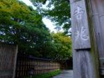 京都吉兆嵐山本店 天龍寺の枝垂れ桜