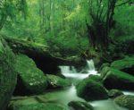 安心のチャーター便で行く!屋久島・種子島 苔むす森へ《白谷雲水峡トレッキングコース》3日間(鹿児島)