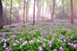 希少植物が咲く雲上の楽園 ガイドと歩く四国山岳植物園「岳人の森」と神通の滝