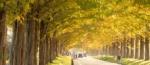 びわ湖高島の秋景色 マキノ高原 メタセコイア並木の紅葉と朽木の名刹 興聖寺(滋賀)