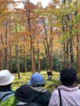 【みんなで!とくしま応援割対象】徳島のええとこあるでよ!! 希少植物が咲く雲上の楽園 現地ガイドと歩く四国山岳植物園「岳人の森」と神通の滝