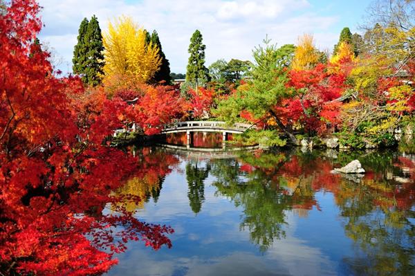 ~京都秋艶 ~   「通天橋」で眺める2000本の唐楓と秋の「永観堂」
