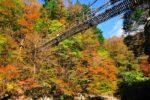 ええとこあるでよ!! 紅葉の奥祖谷二重かずら橋と祖谷渓温泉