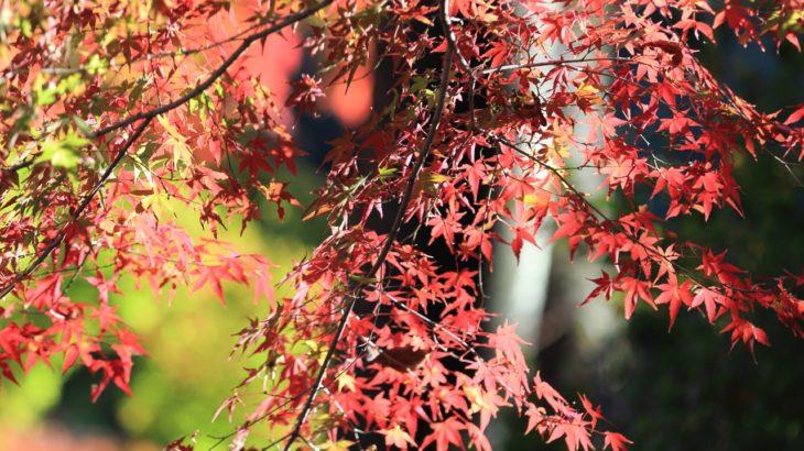 【みんなで!とくしま応援割対象】徳島のええとこあるでよ!二つの滝めぐり  龍頭の滝・琵琶の滝と秋のかずら橋